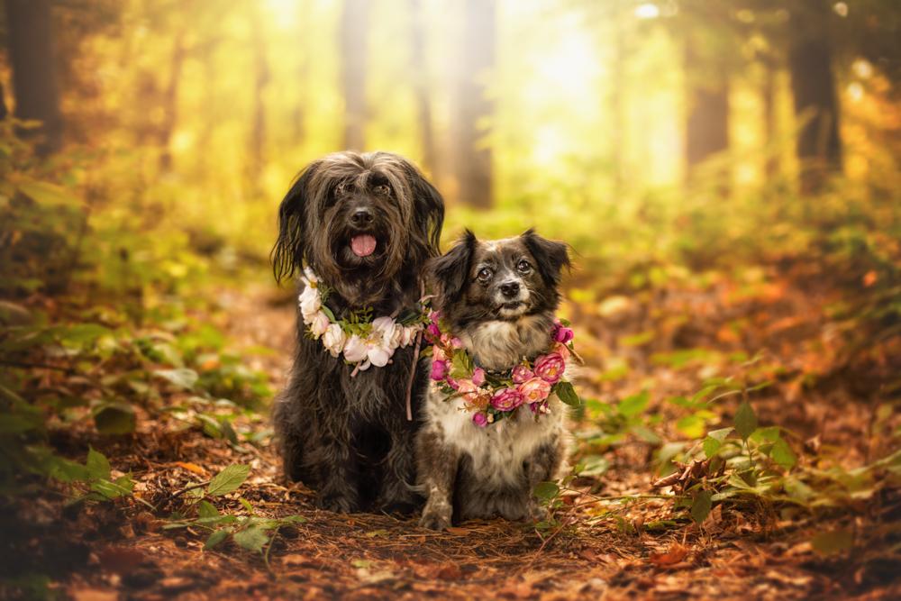 tierfotograf hundefotograf trier bitburg luxemburg blumenkranz