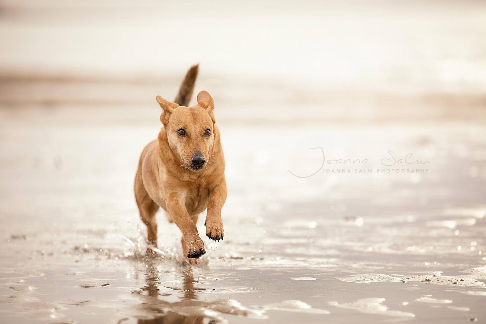 Tierfotograf Hundefotograf Fotograf Trier Bitburg Luxembourg Eifel Schweich Speicher Hund im Wasser